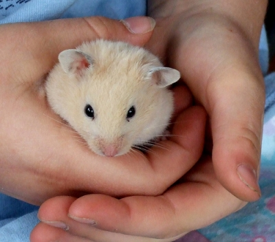 picture child holding a hamster